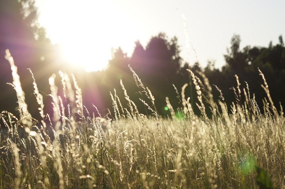 depth of field photo of grass field
