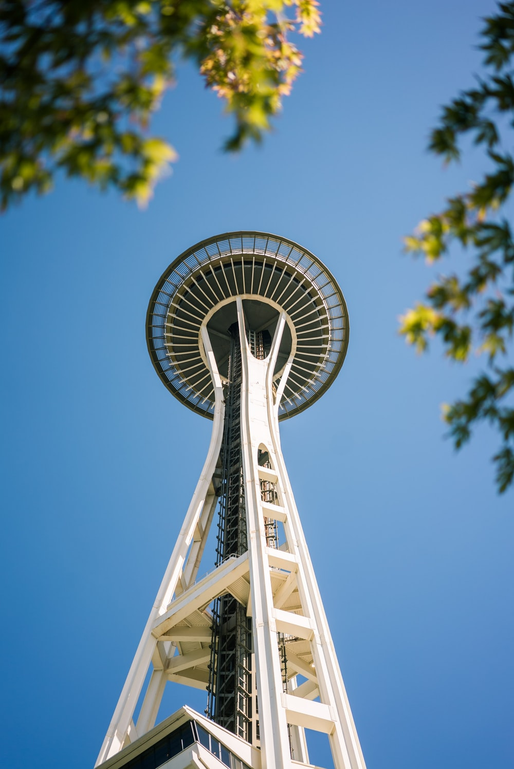 Seattlego To Www Bing Com: Seattle, Tree, Building And Architecture