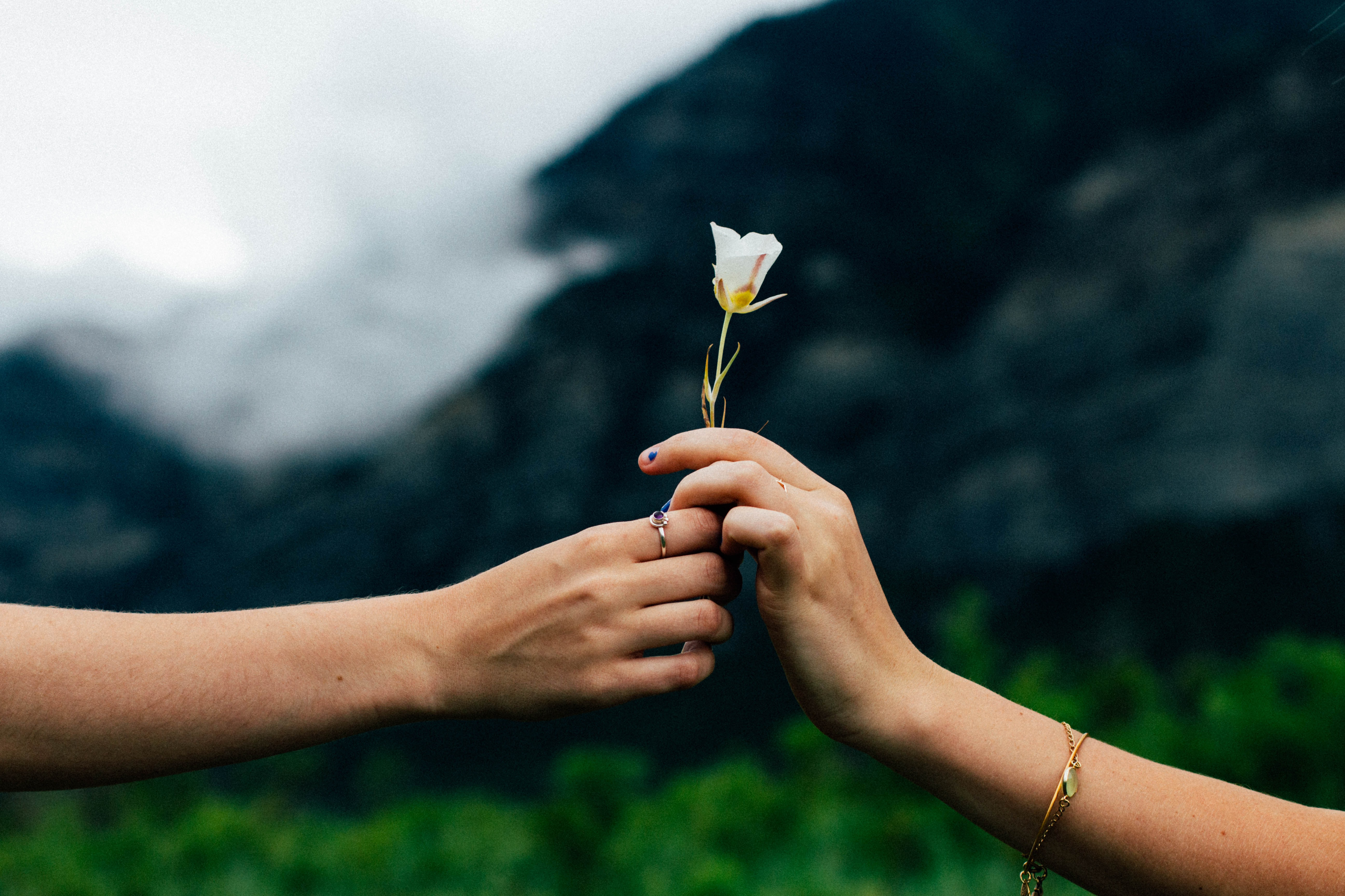 A flower being passed romantically from hand to hand