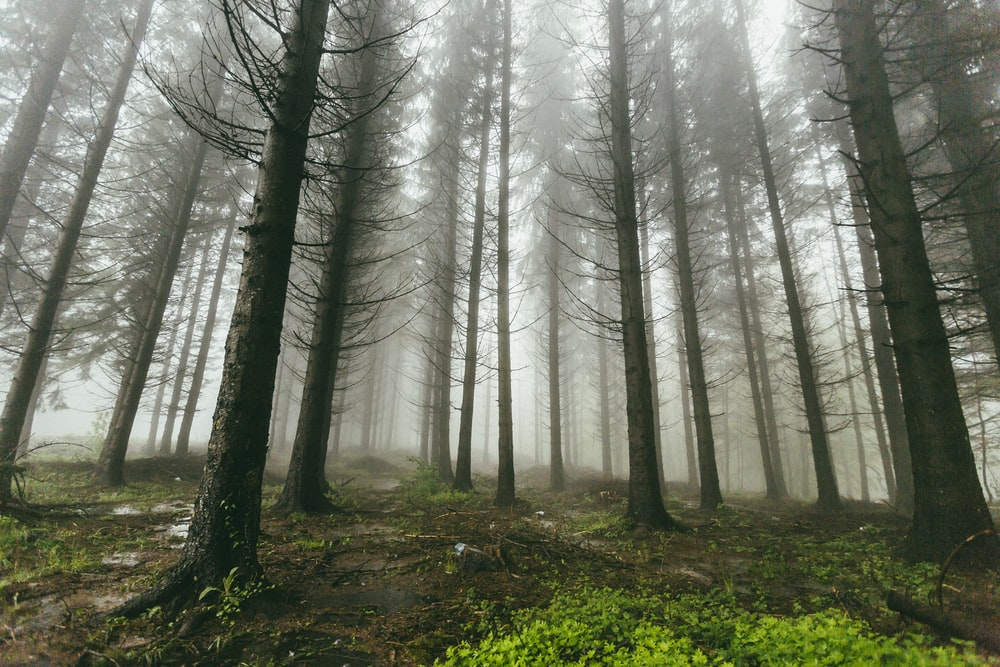 fogs covering forest
