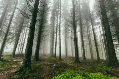fogs covering forest serbia zoom background