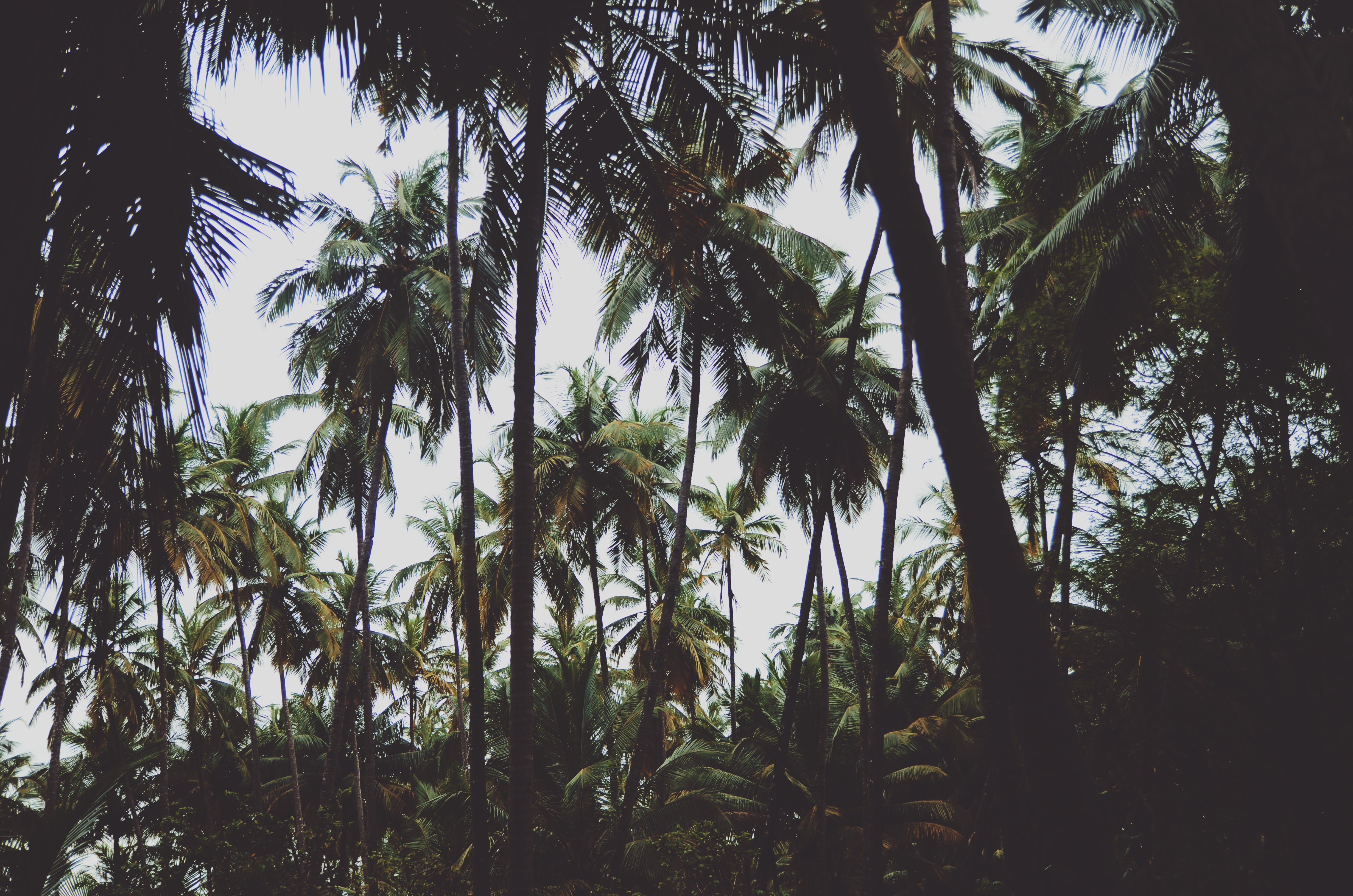 low-angle view of coconut trees