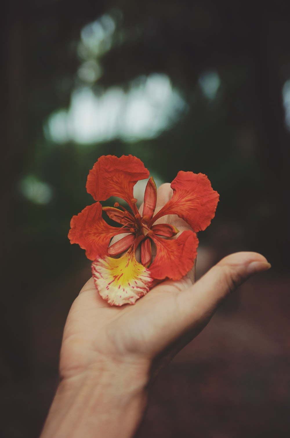 selective focus photography of person holding red petaled flower