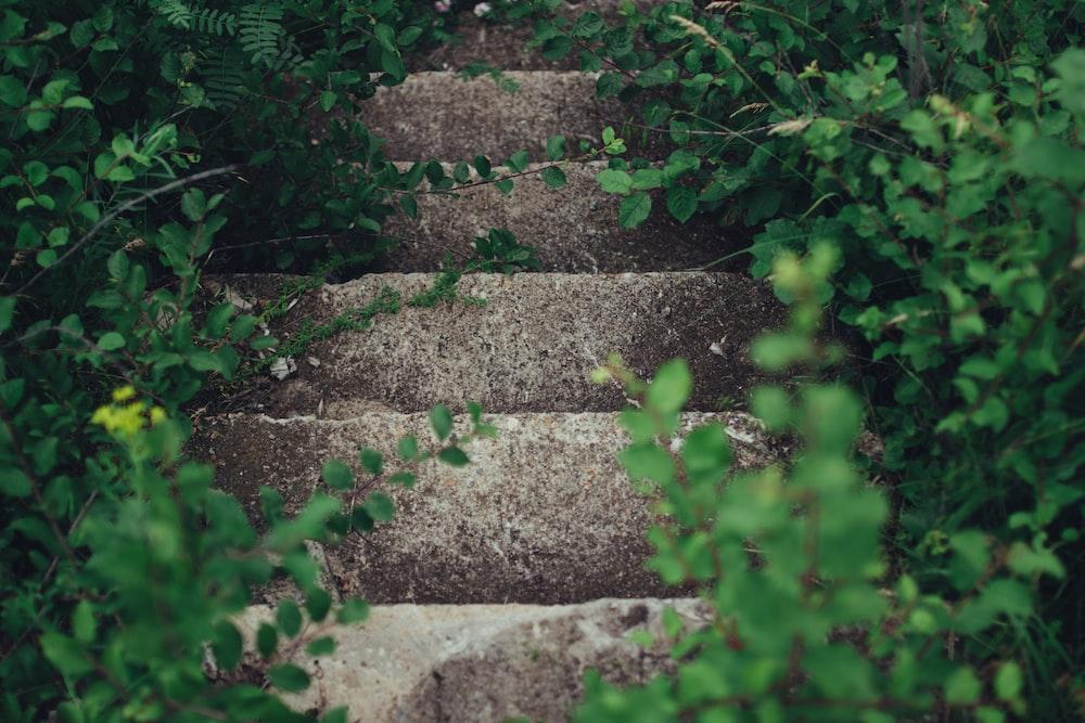 gray concrete stairway between plants