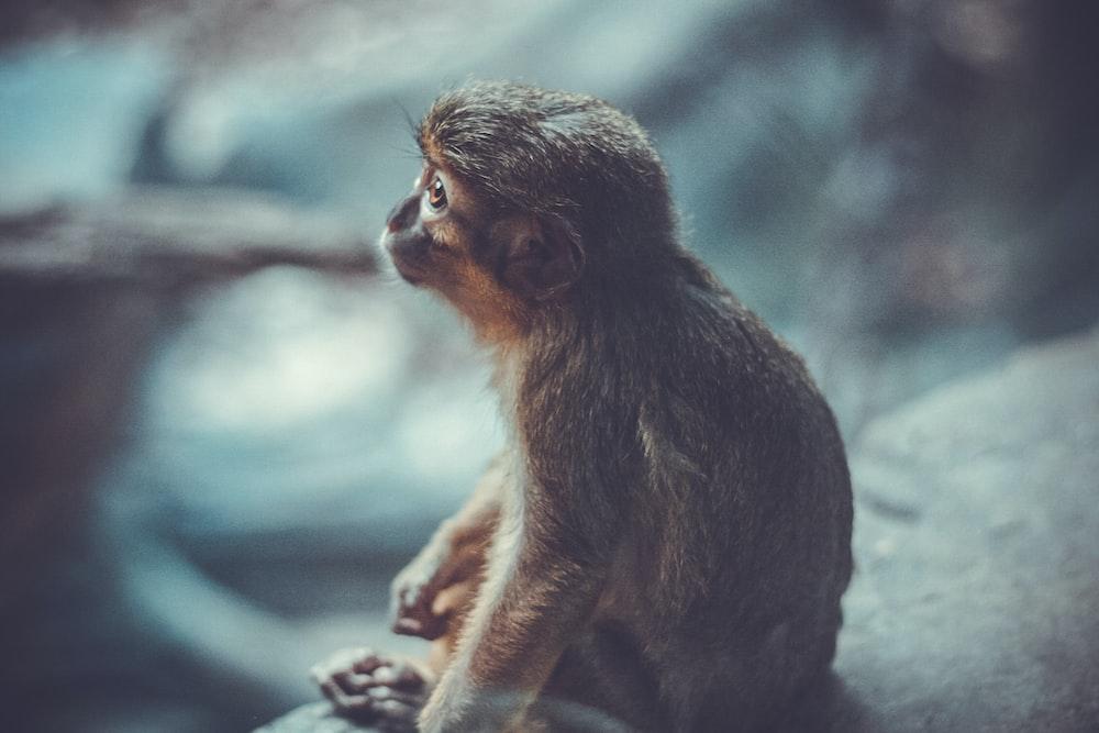 shallow photography of monkey sitting on grey stone looking elsewhere