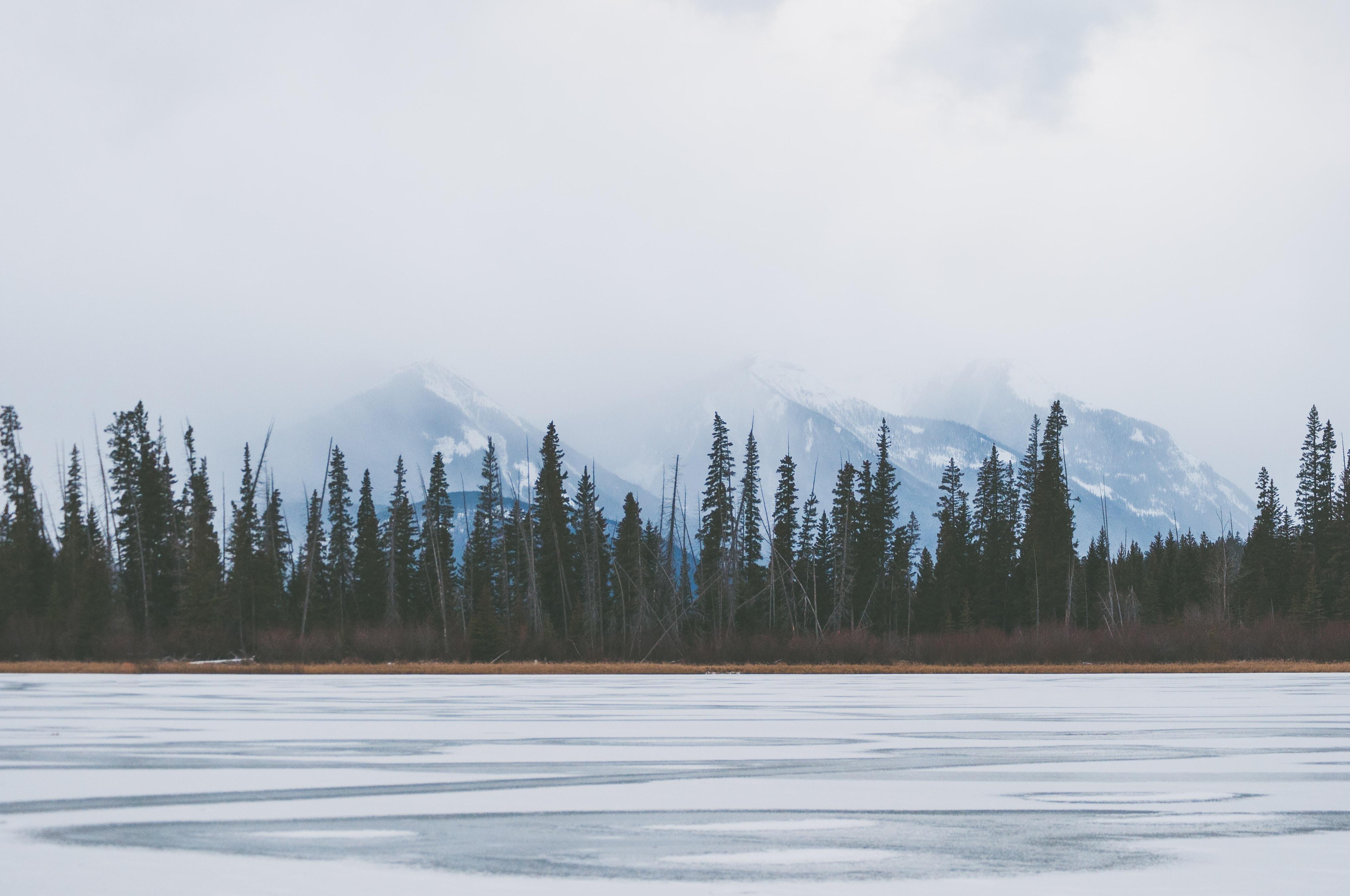 frozen lake near tall green trees