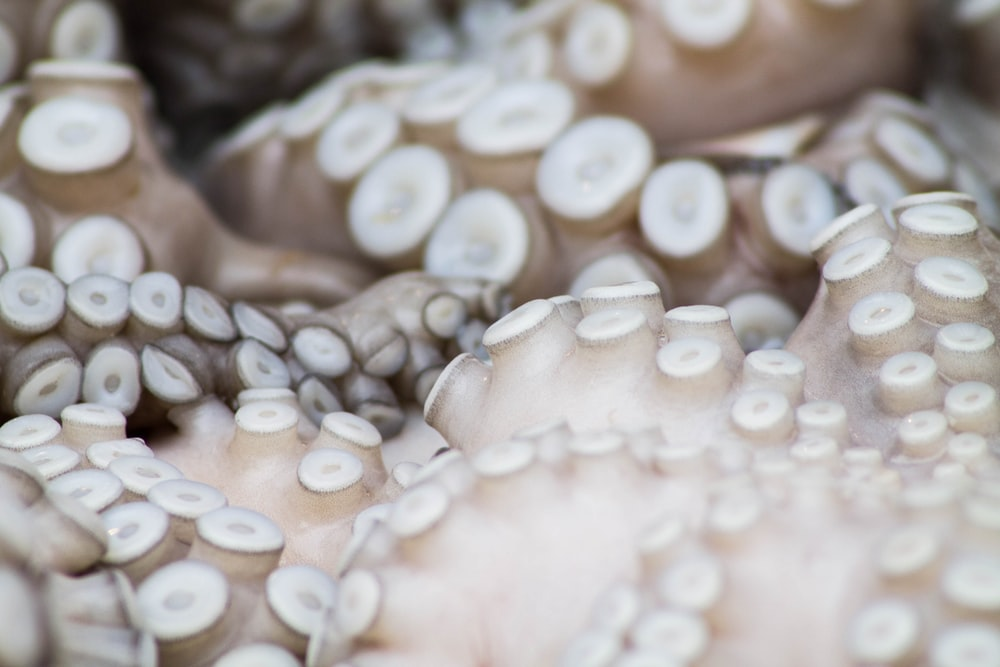 shallow focus photography of octopus