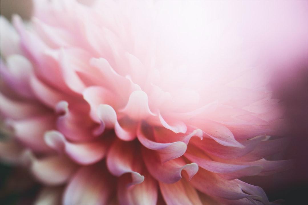 3889. Virágok