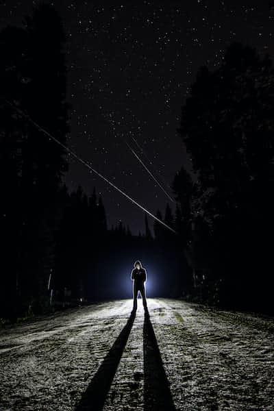Midnight forest stories