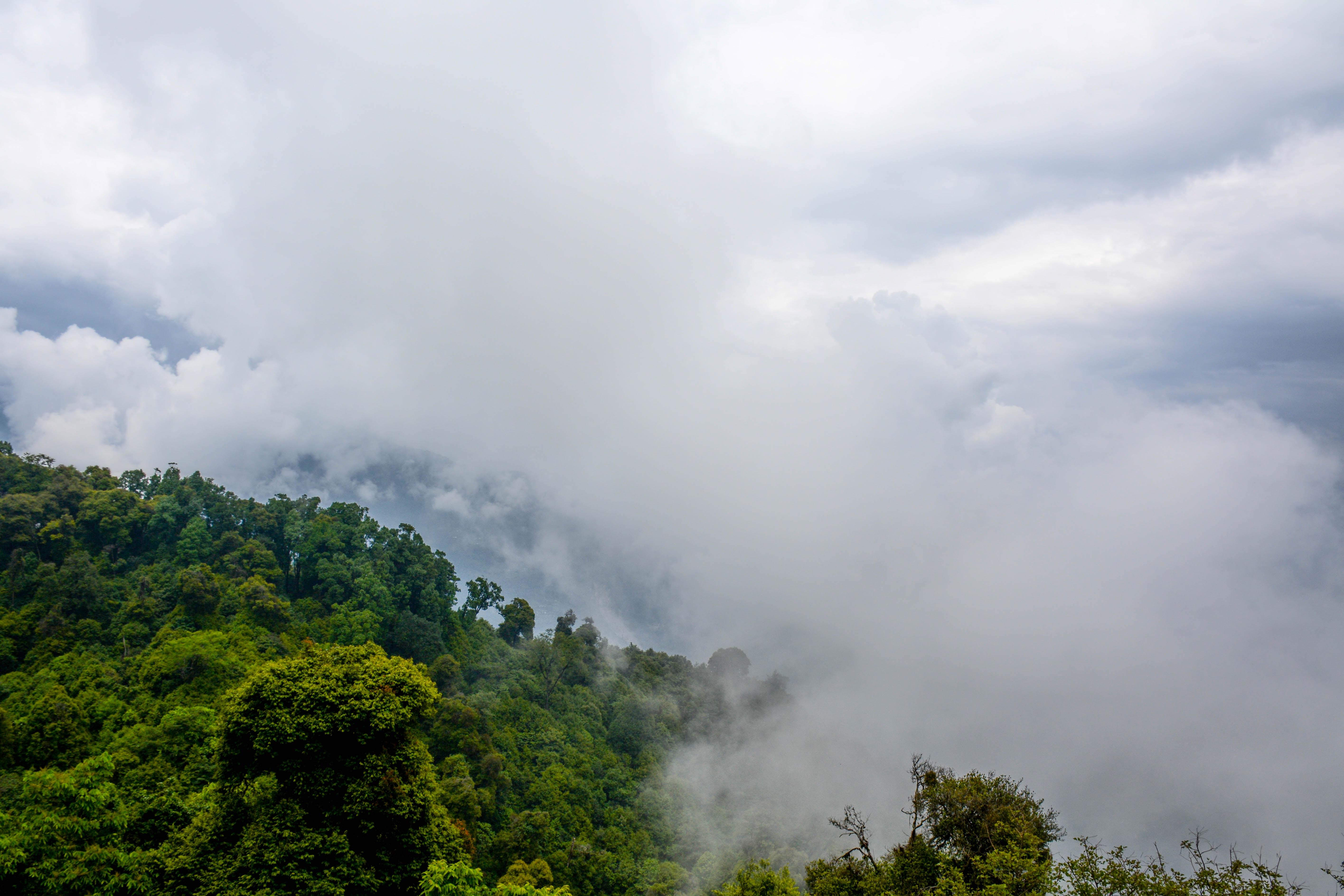 Clouds enveloping a wooded slope in Ravangla