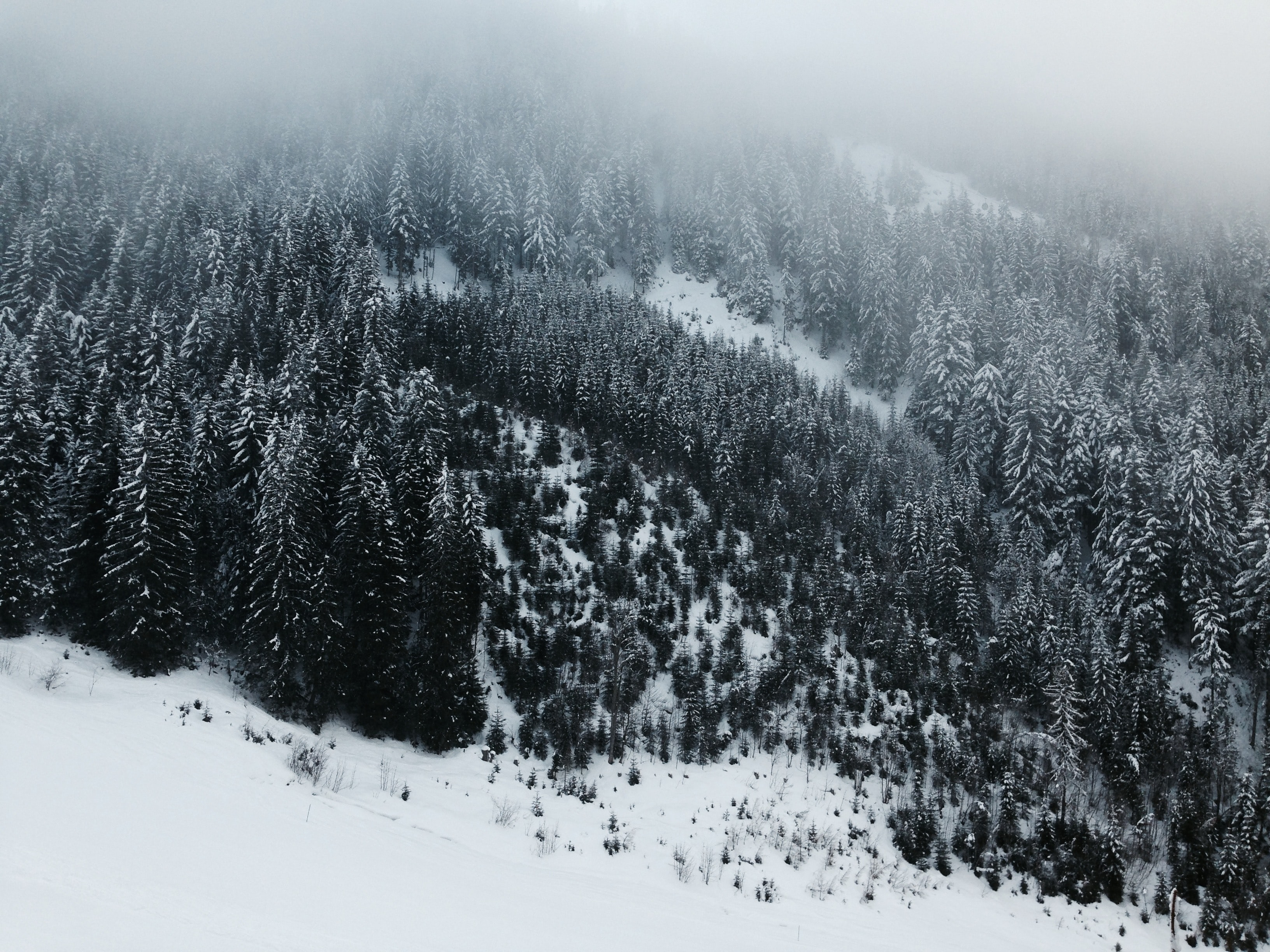 Snow-covered forest in Austria with fog