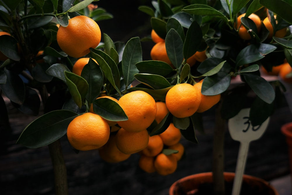 selective focus photography of orange fruits