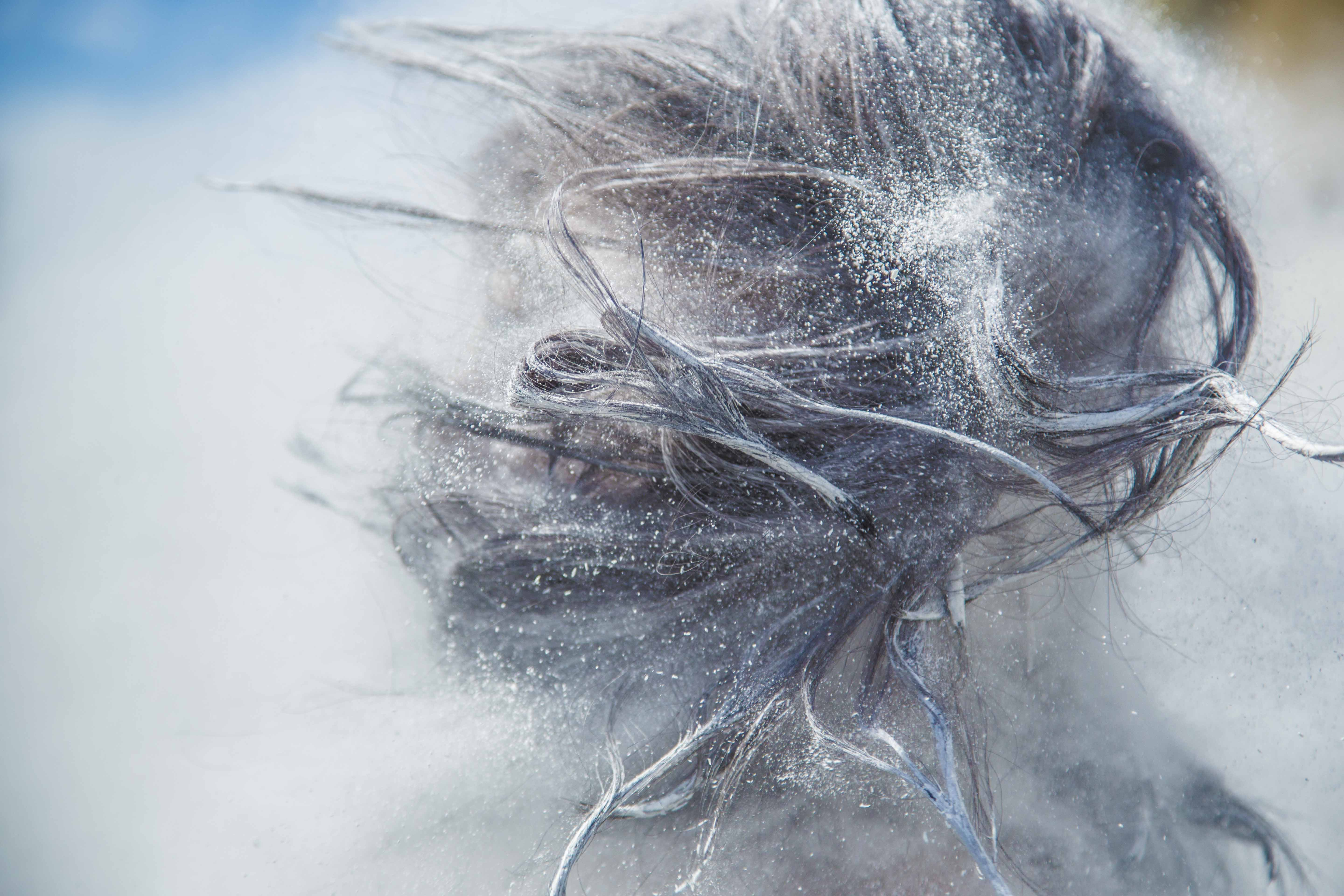 A macro view of snow dusted hair in movement.