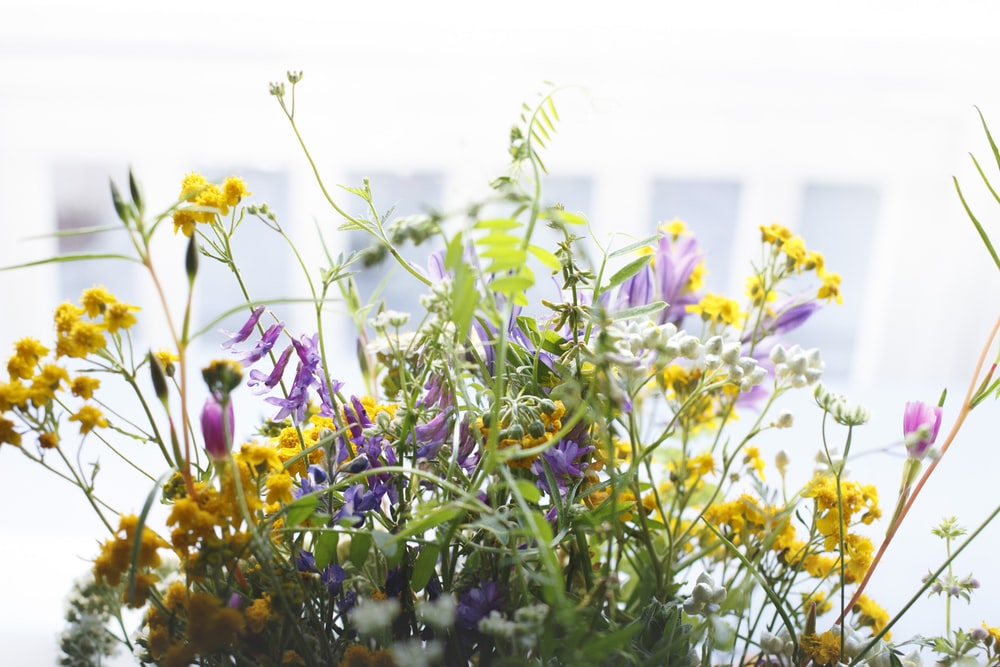 yellow and purple petaled flowers