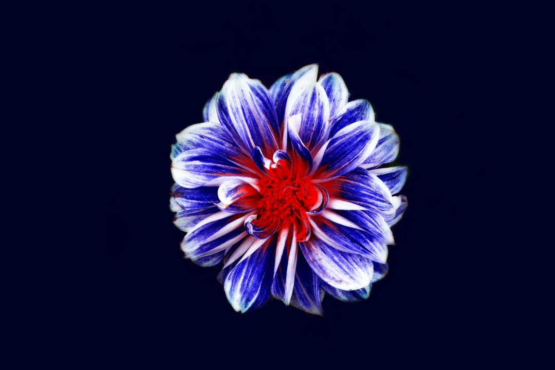 A macro shot of a flower with a red center and blue petals