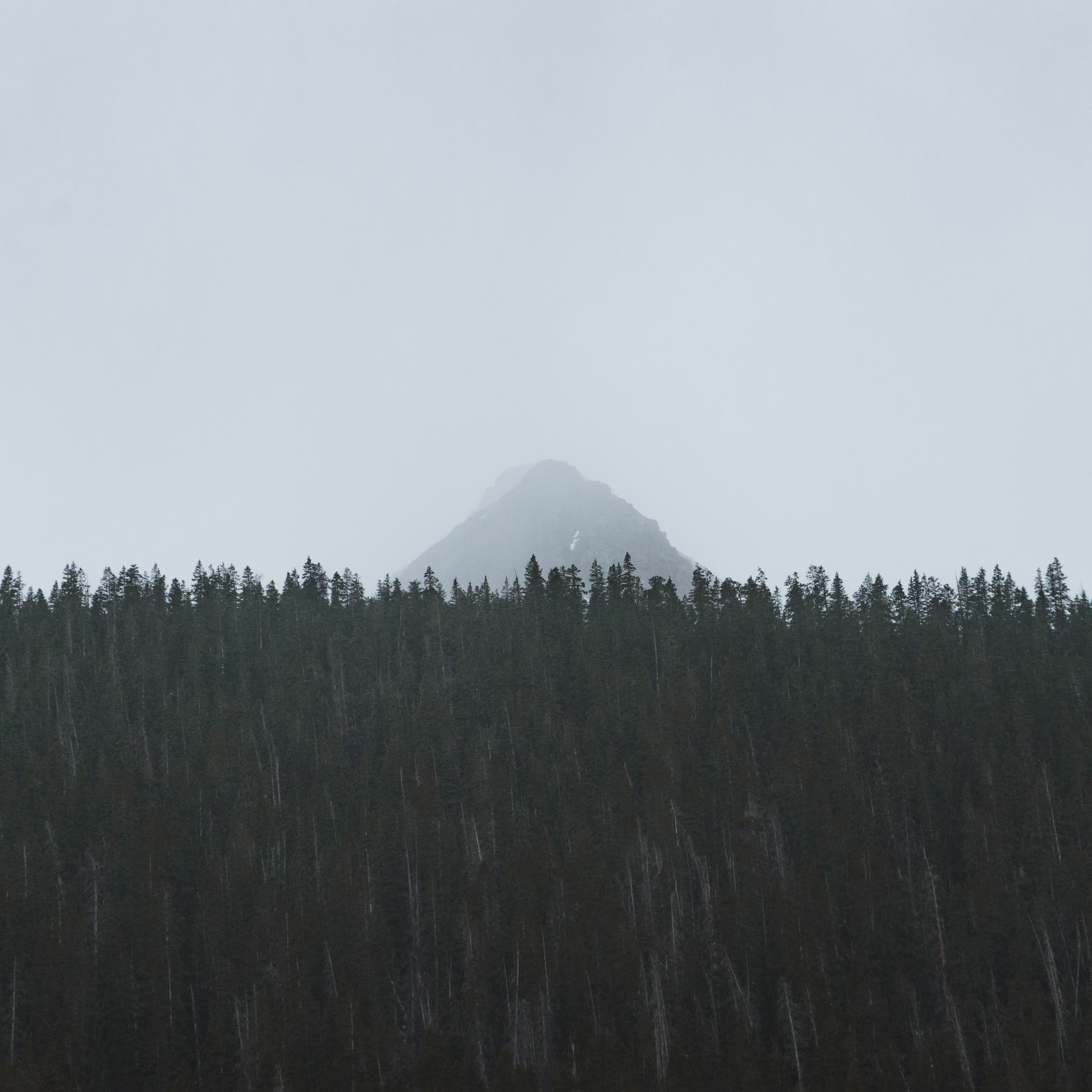 A tall mountain peak shrouded in fog behind a dark forest