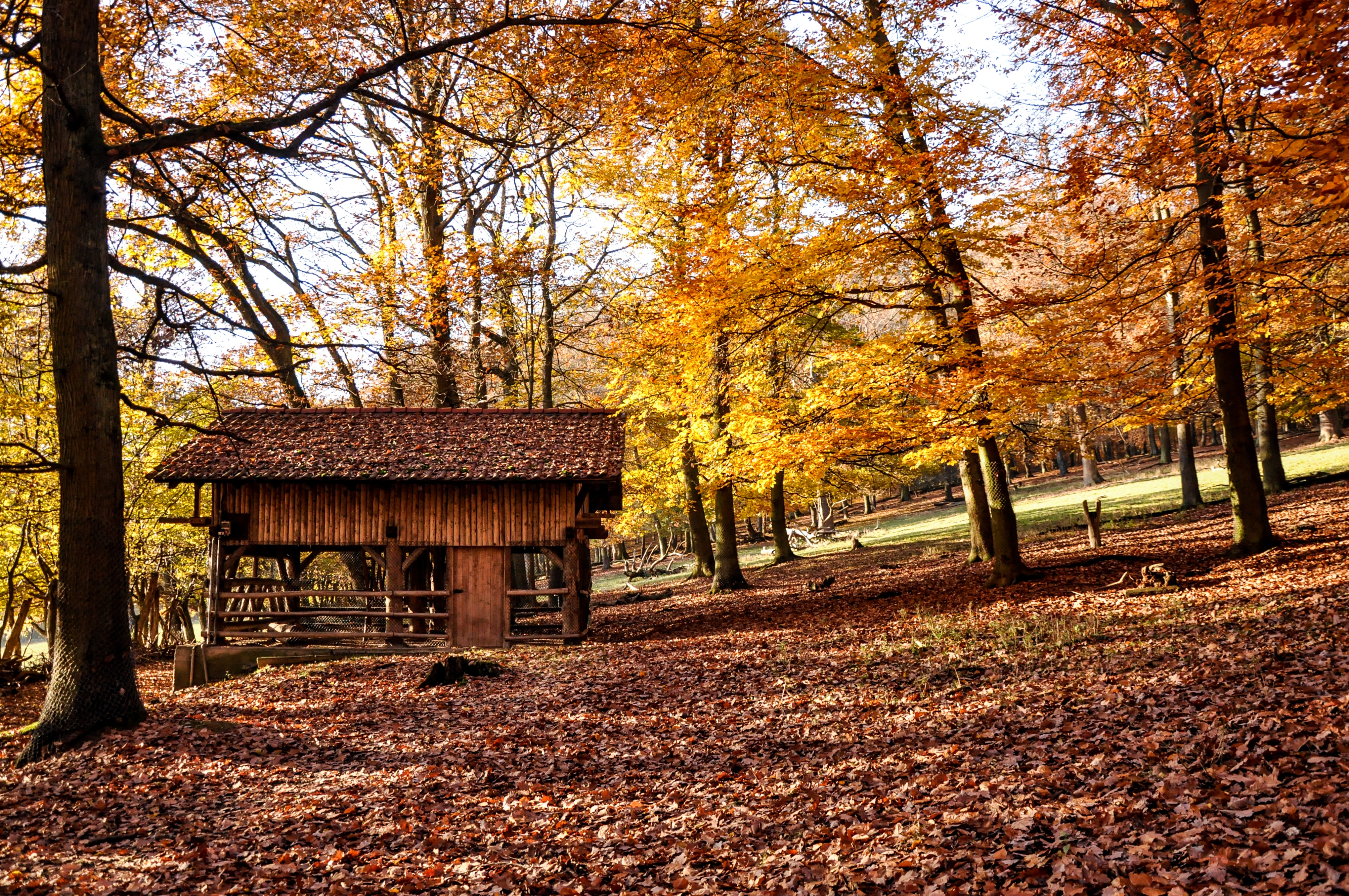 A small shack in a park in the autumn