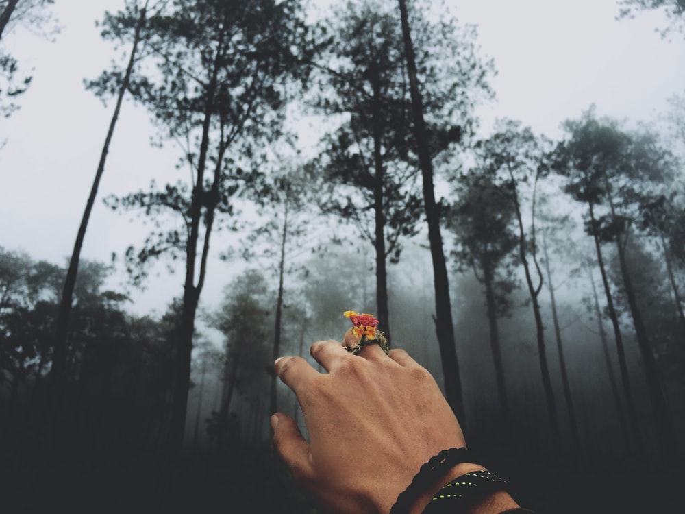person at forest covered in fog