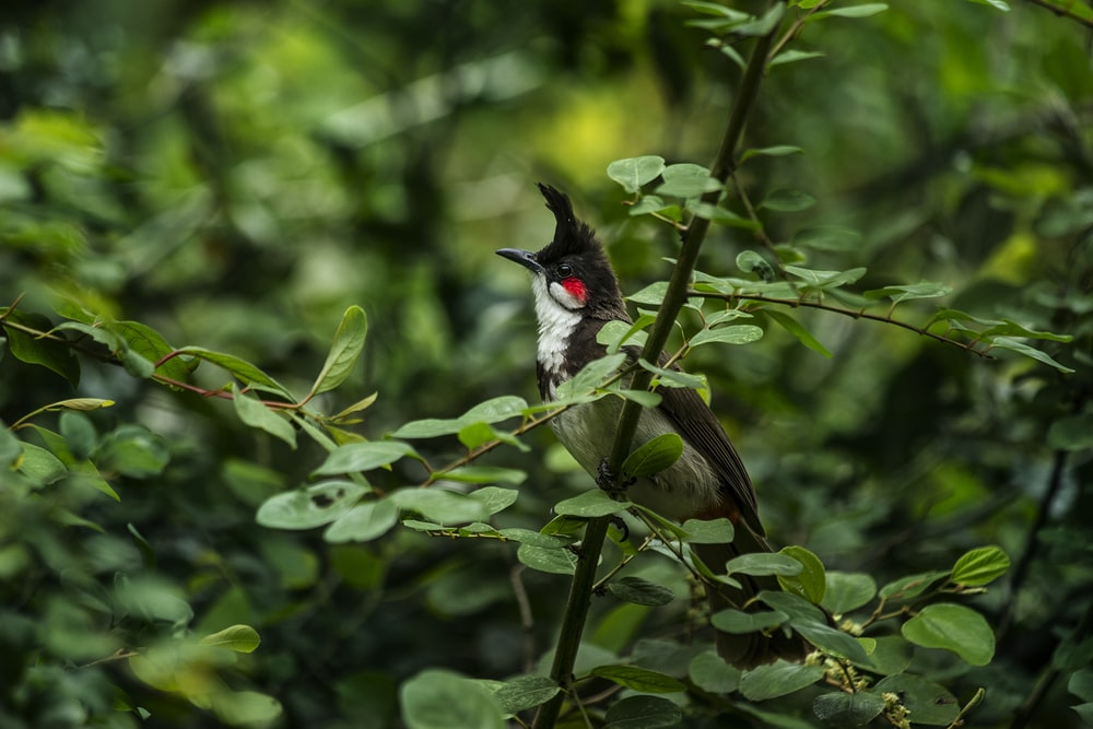 selective focus photography of black bird perch on green tree
