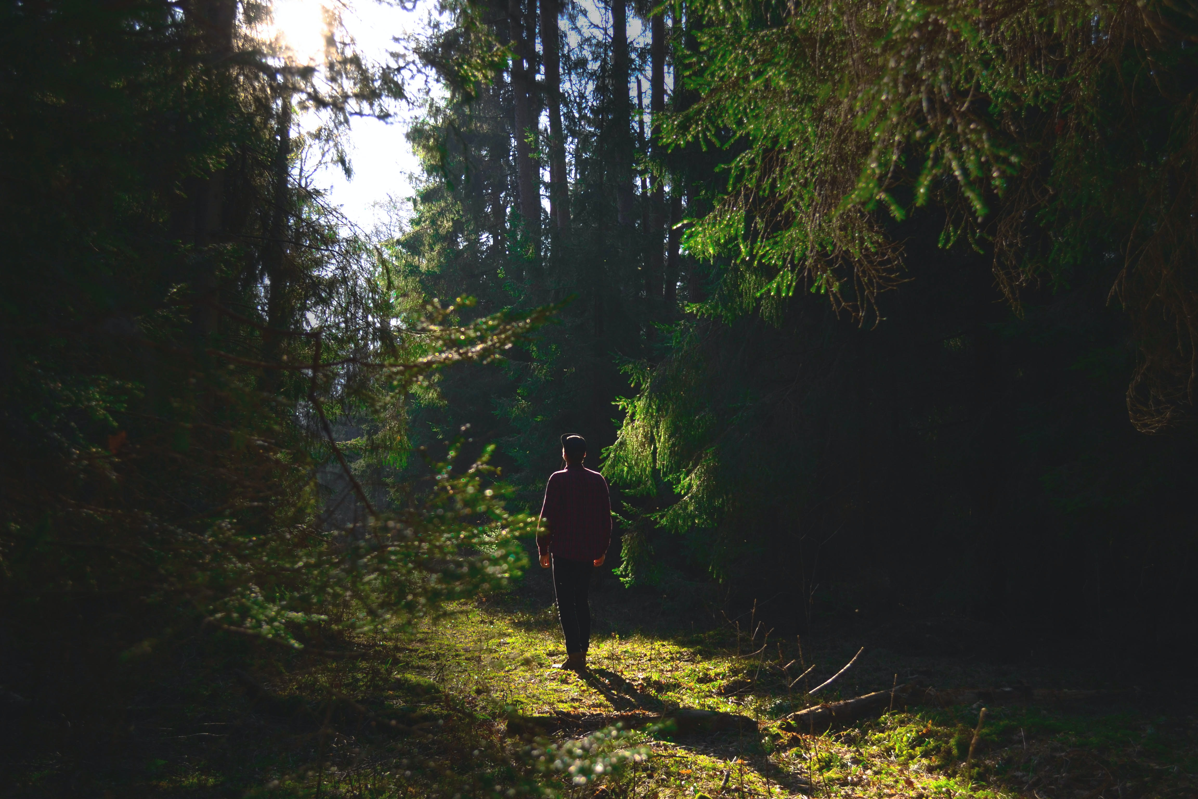 A person and his shadow walking through green foliage in a forest