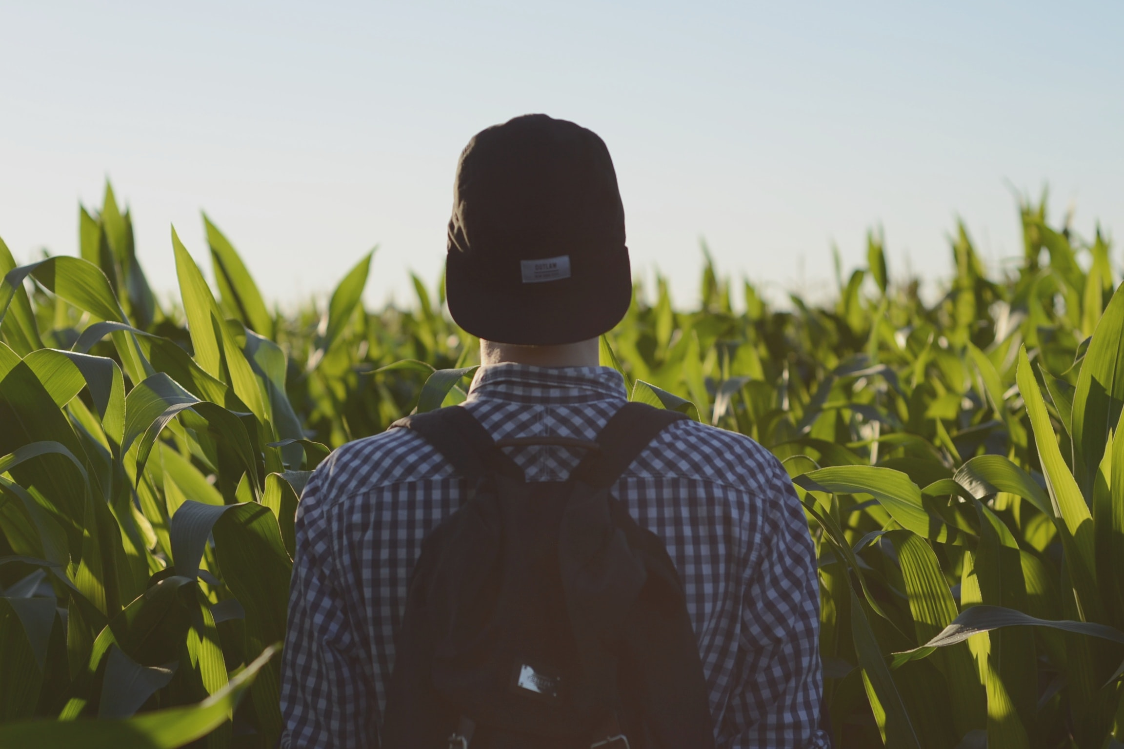 A man wearing a backward hat, flannel, and backpack standing in a field of corn