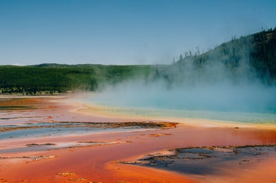 yellowstone-geyser-trees