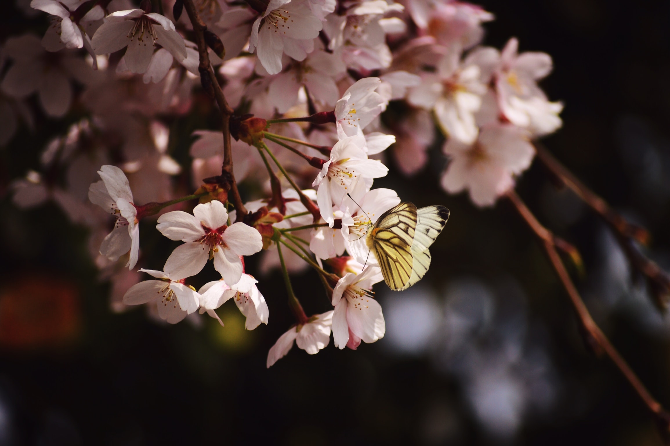 shallow focus photography of butterfly on flower