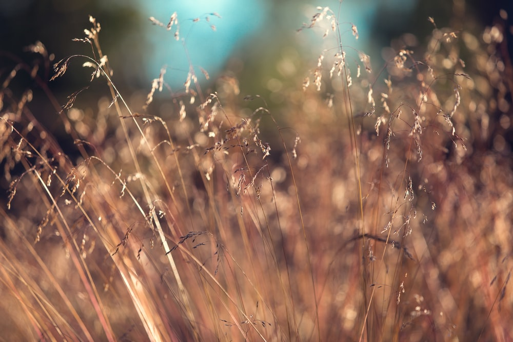selective focus photo of tall grass