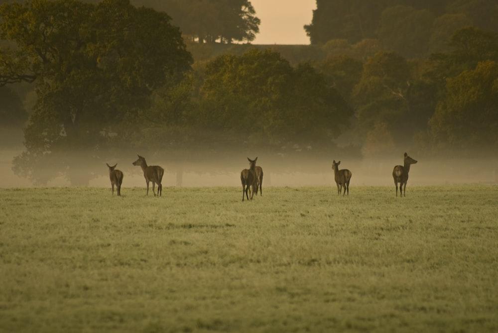 herd of brown deer