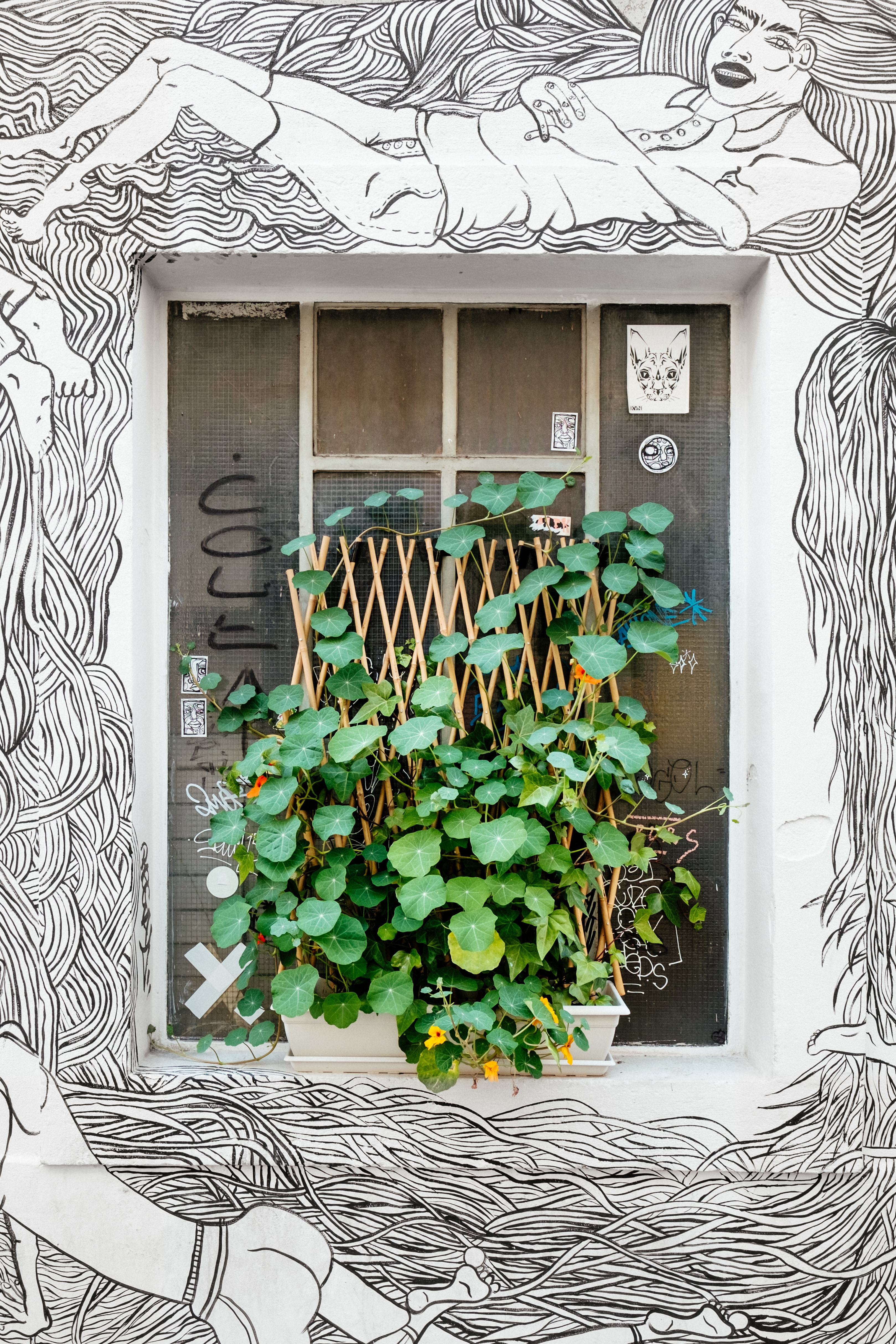 Black and white graffiti surrounding urban window with potted green plant growing on ledge, Geneva
