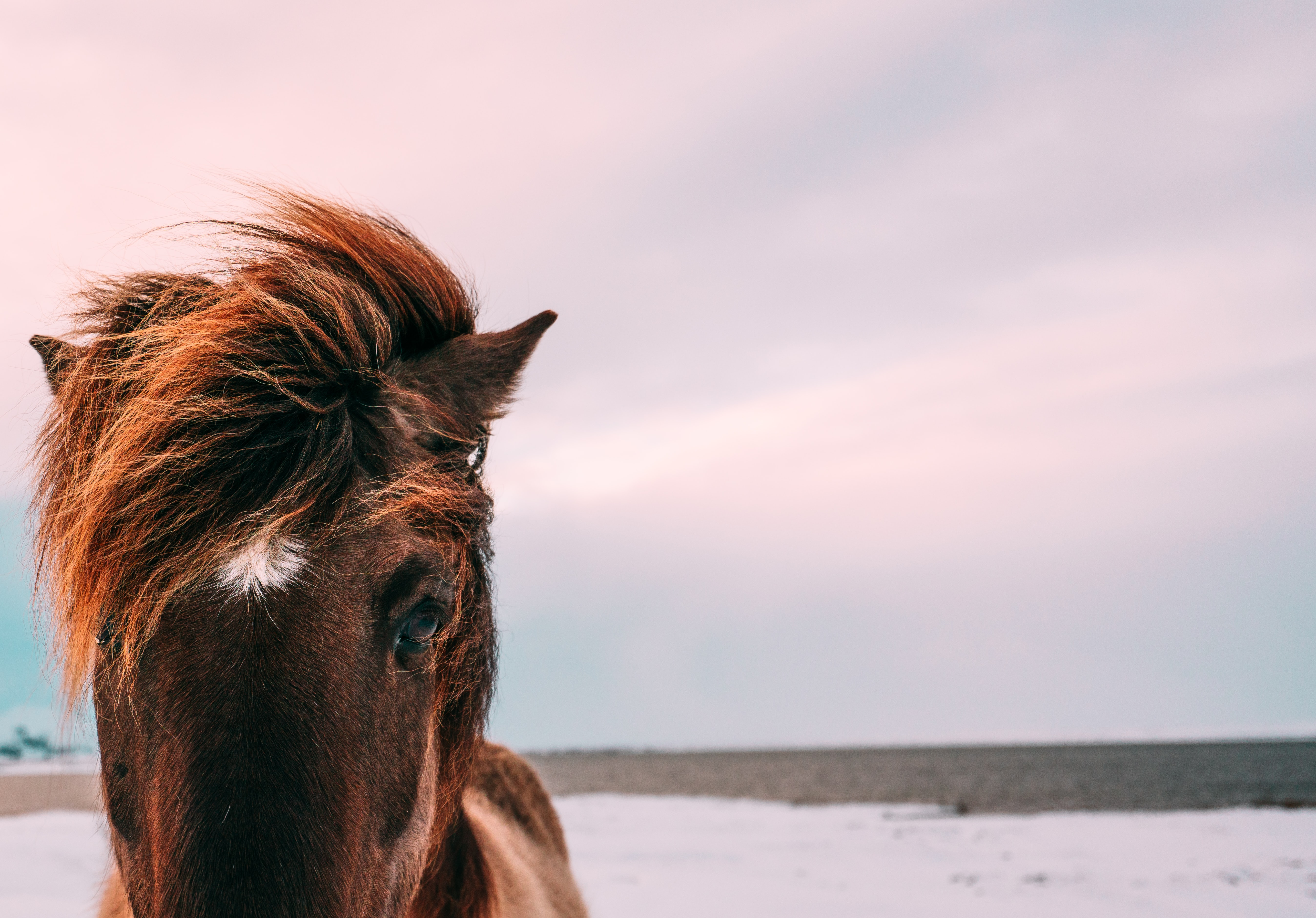 Close-up of the head of a brown horse with a tousled mane standing in the snow