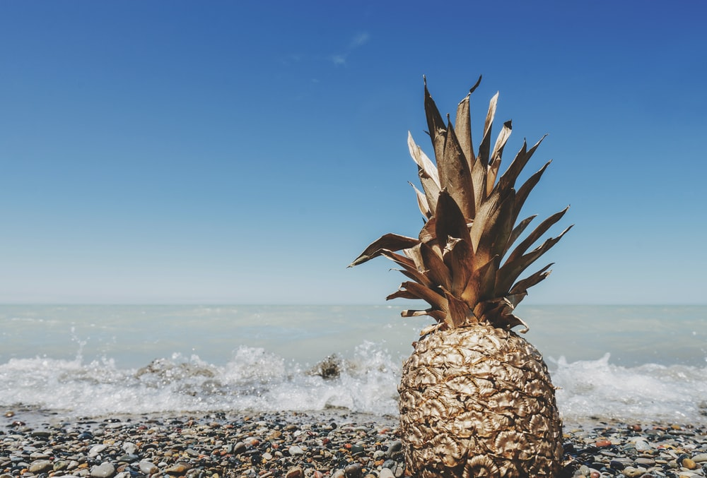 brown pineapple on seashore near water at daytime