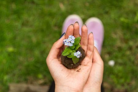 Have a Praiseworthy Garden