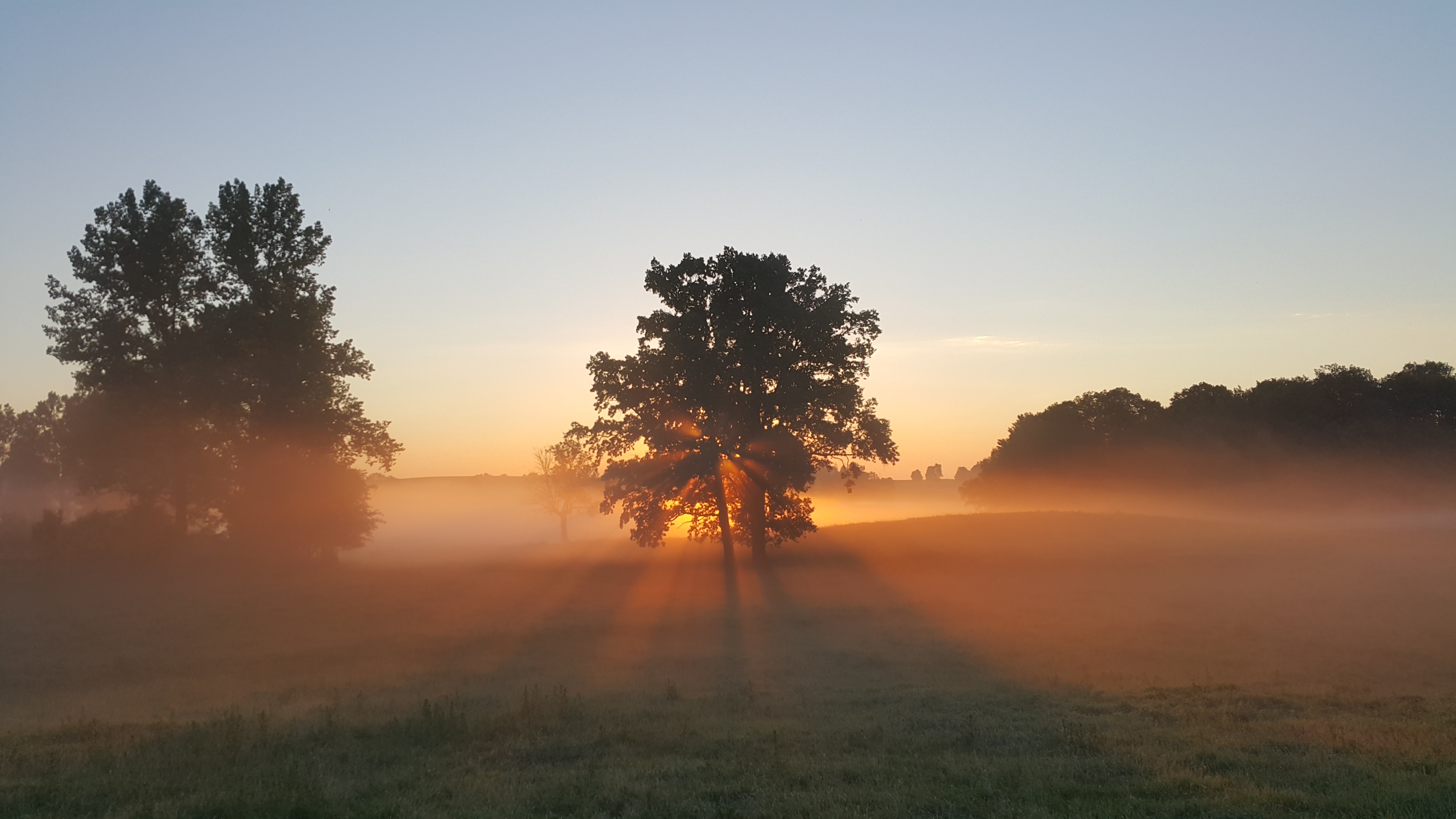 Sun beams shine through trees in a foggy countryside pasture