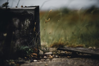 green grasses near black wooden box