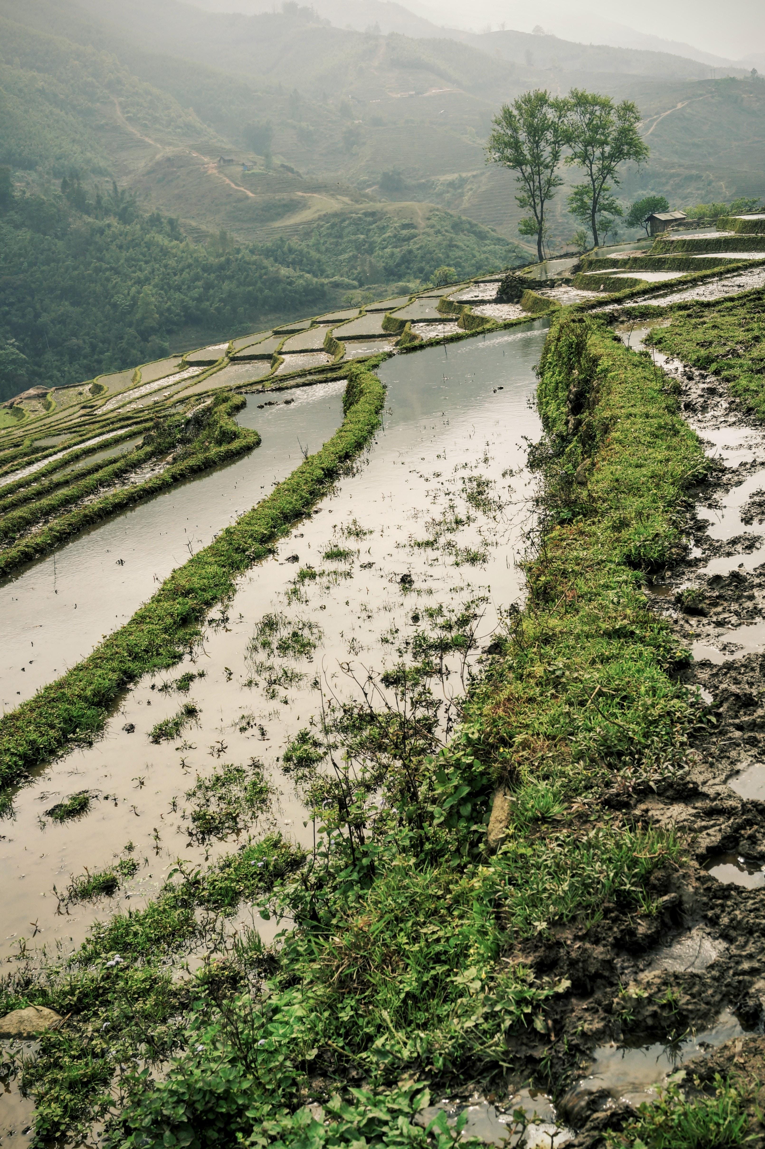 A rice terrace in Vietnam.