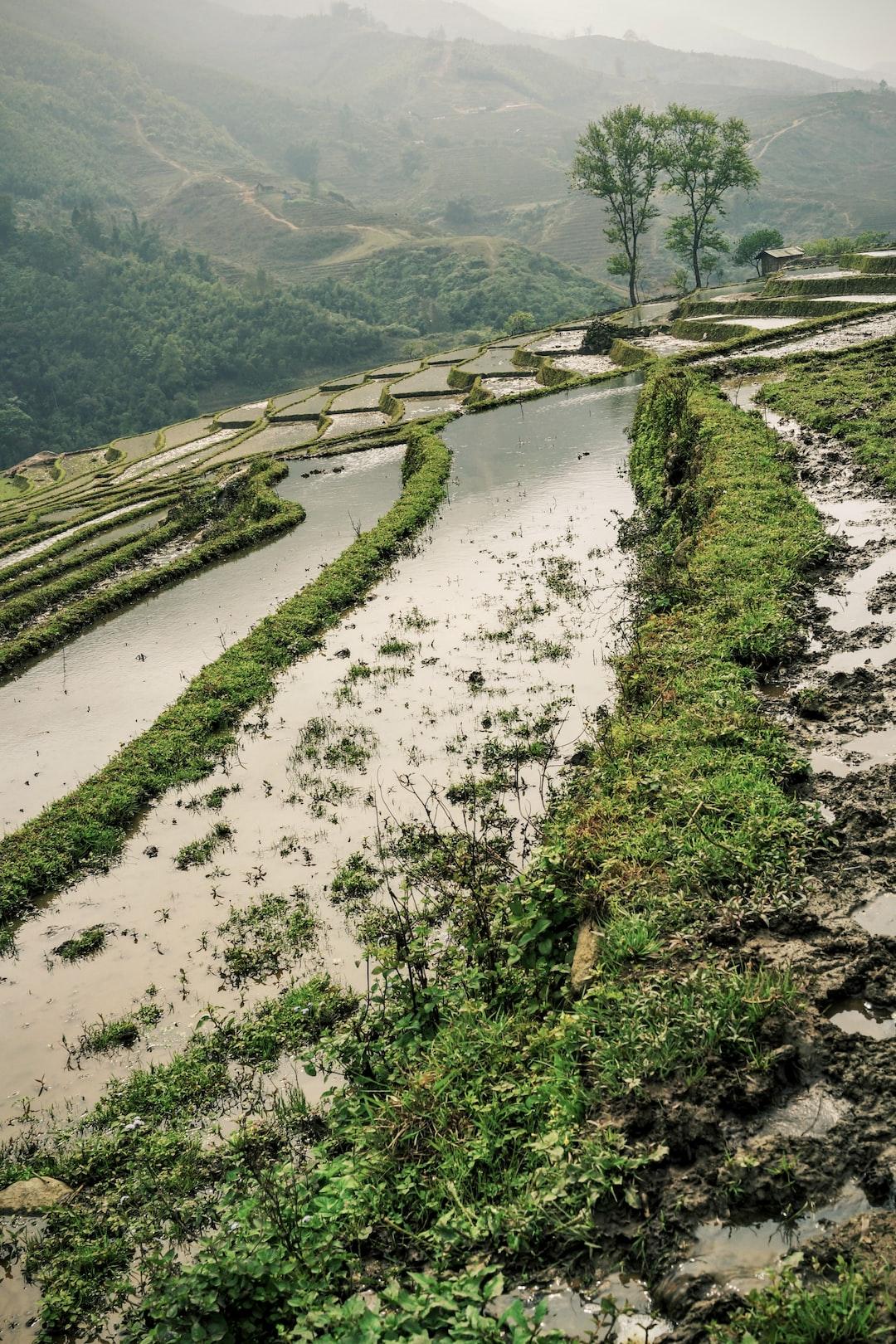 vietnam rice terrace