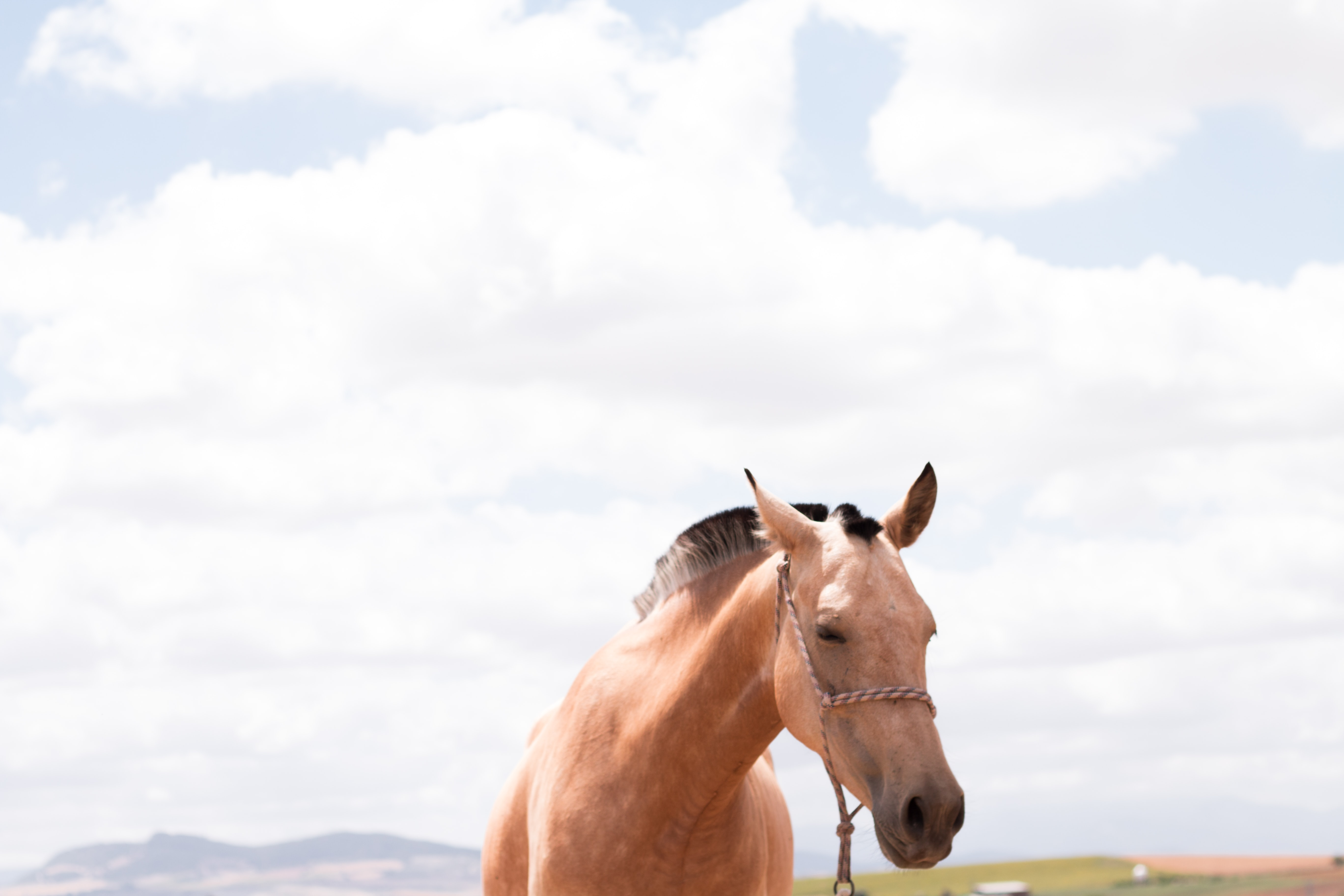 A light chestnut horse on a pasture with fluffy clouds above