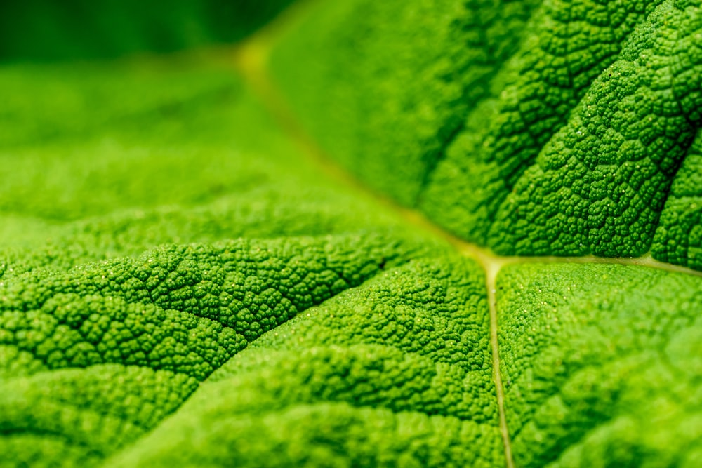 close up photo of green leaf