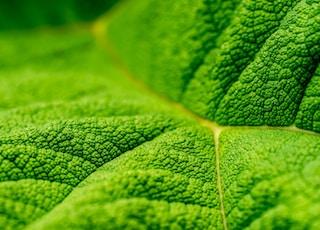 close up photo of green leaf