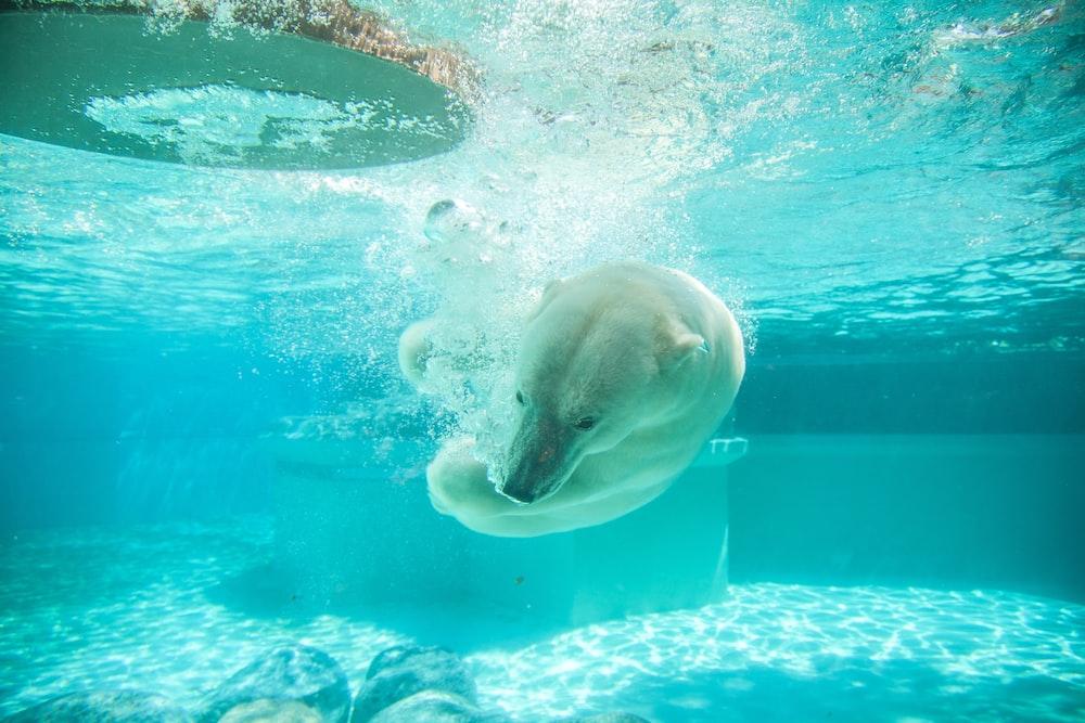 polar bear in body of water photography