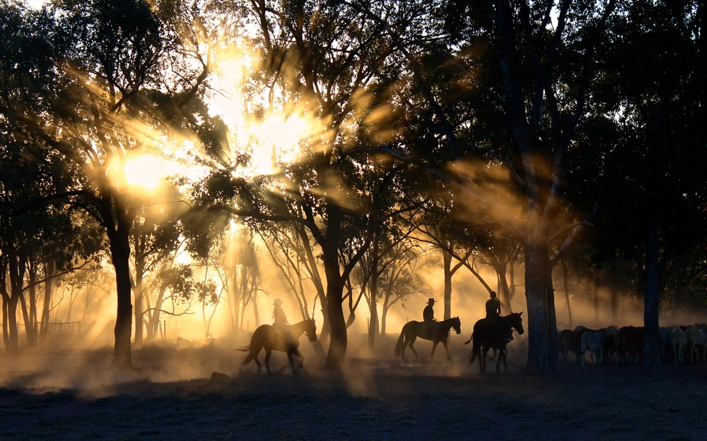 silhouette photography of horse riders on trees