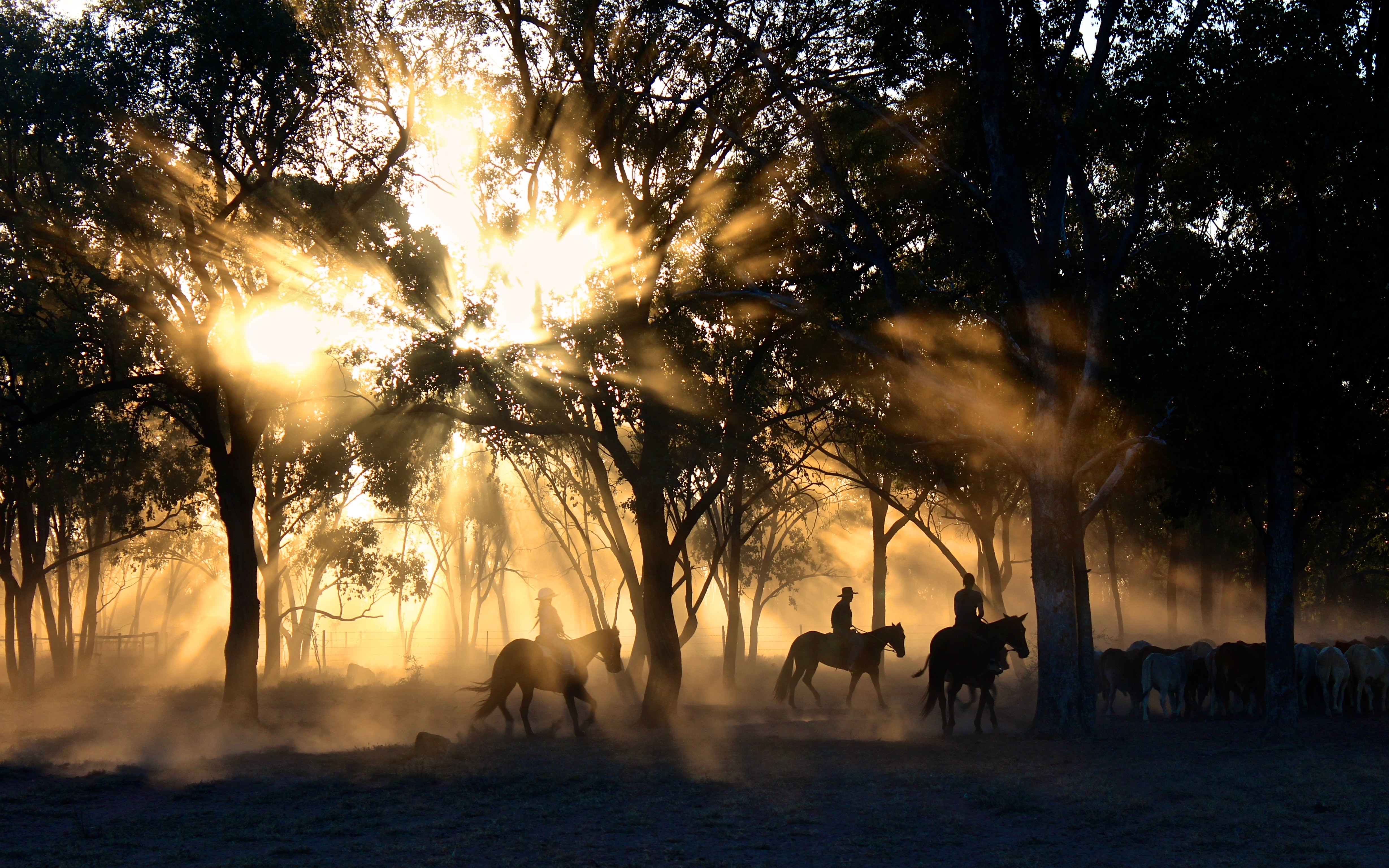 Silhouettes of riders on horseback against the radiant sun breaking through the trees
