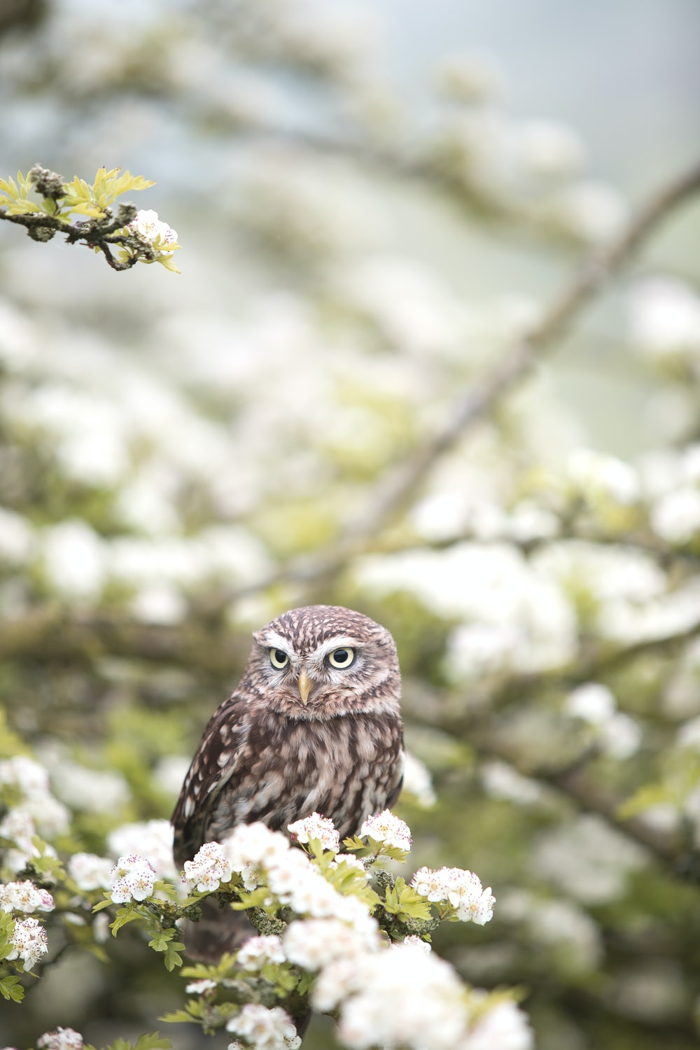 brown owl on tree branch in shallow focus photography