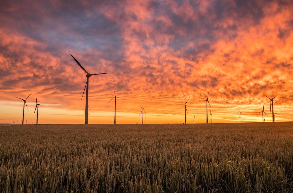 landscape photography of grass field with windmills under orange sunset
