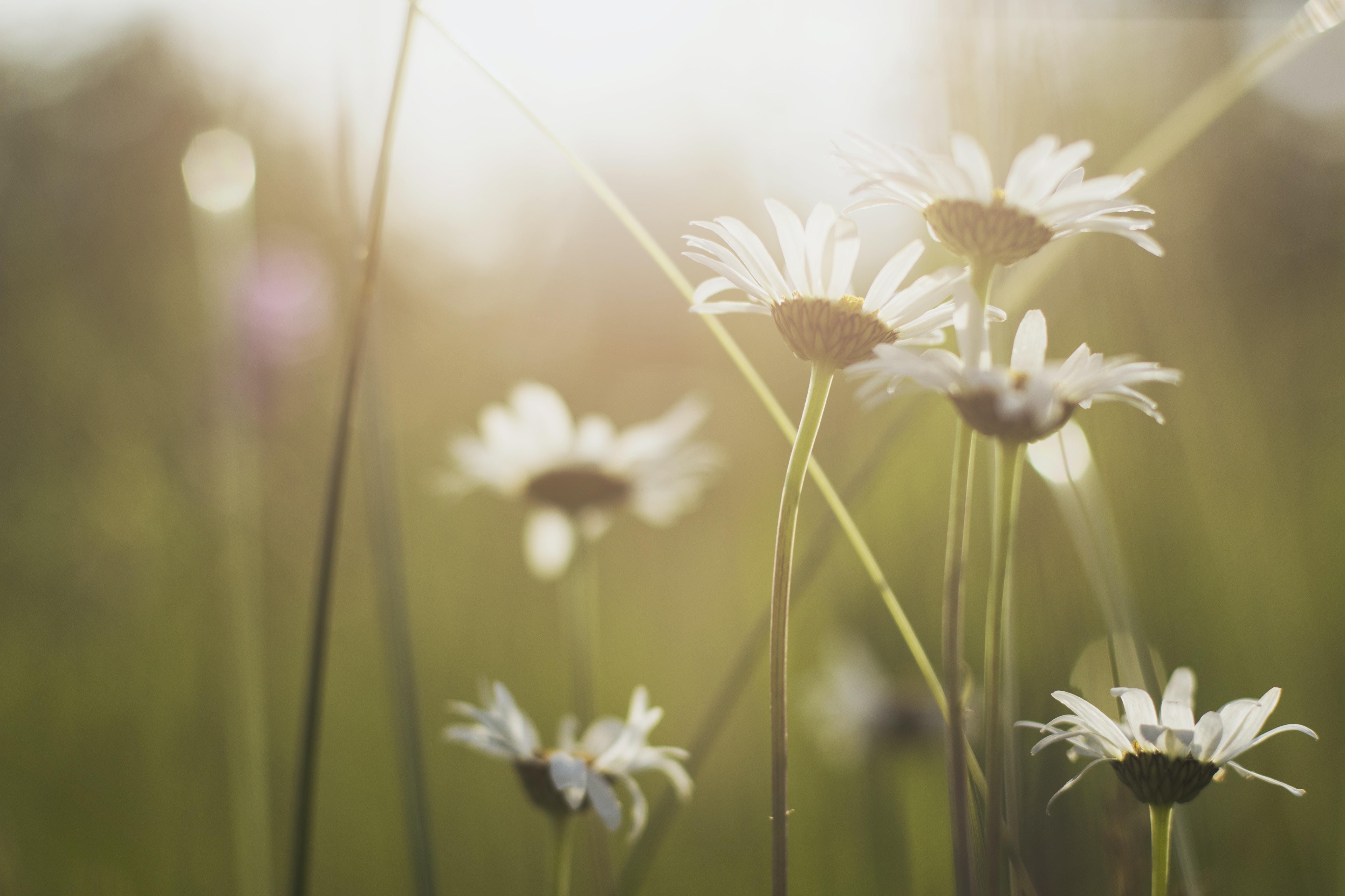 Beautiful Daisies nature stories