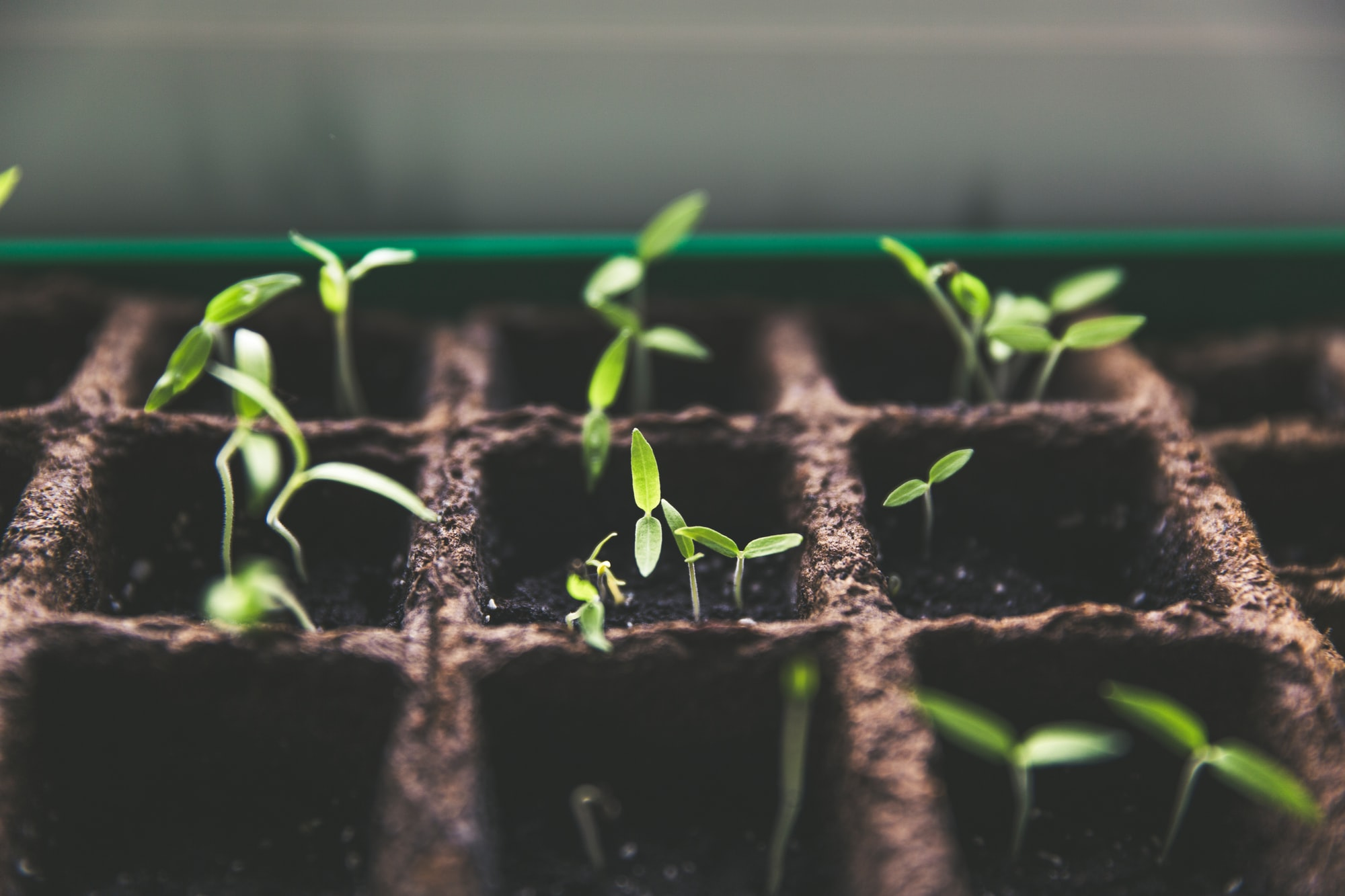 Seed Funding: How Frst Encourages Risk