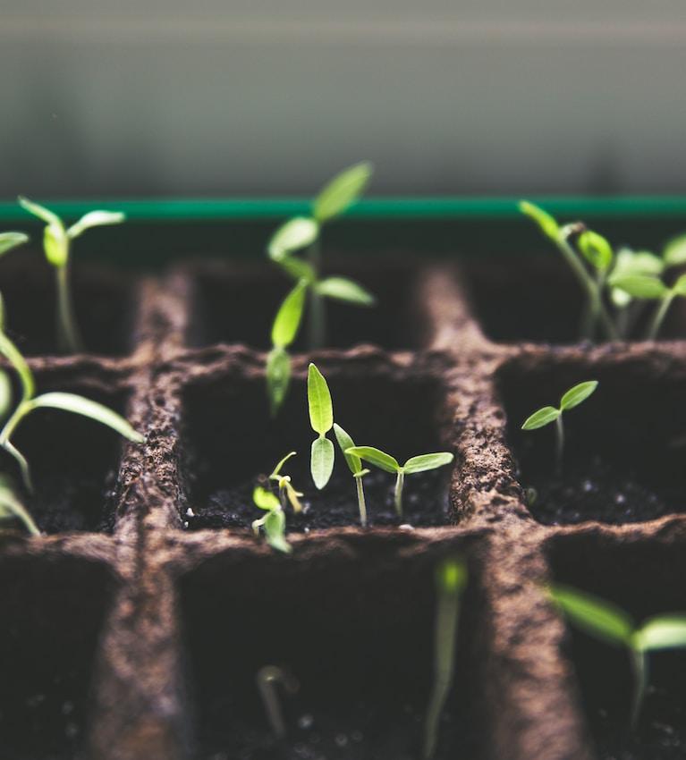 selective focus photo of plant spouts