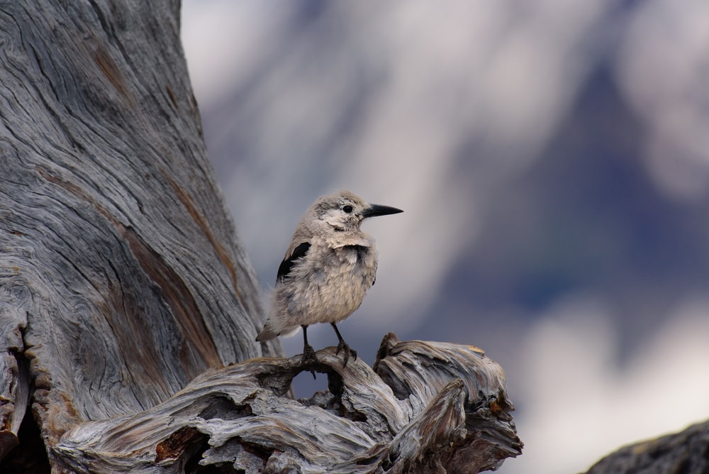 shallow focus of gray bird perch in tree branch