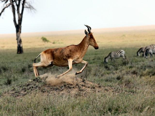 Splendid Safaris